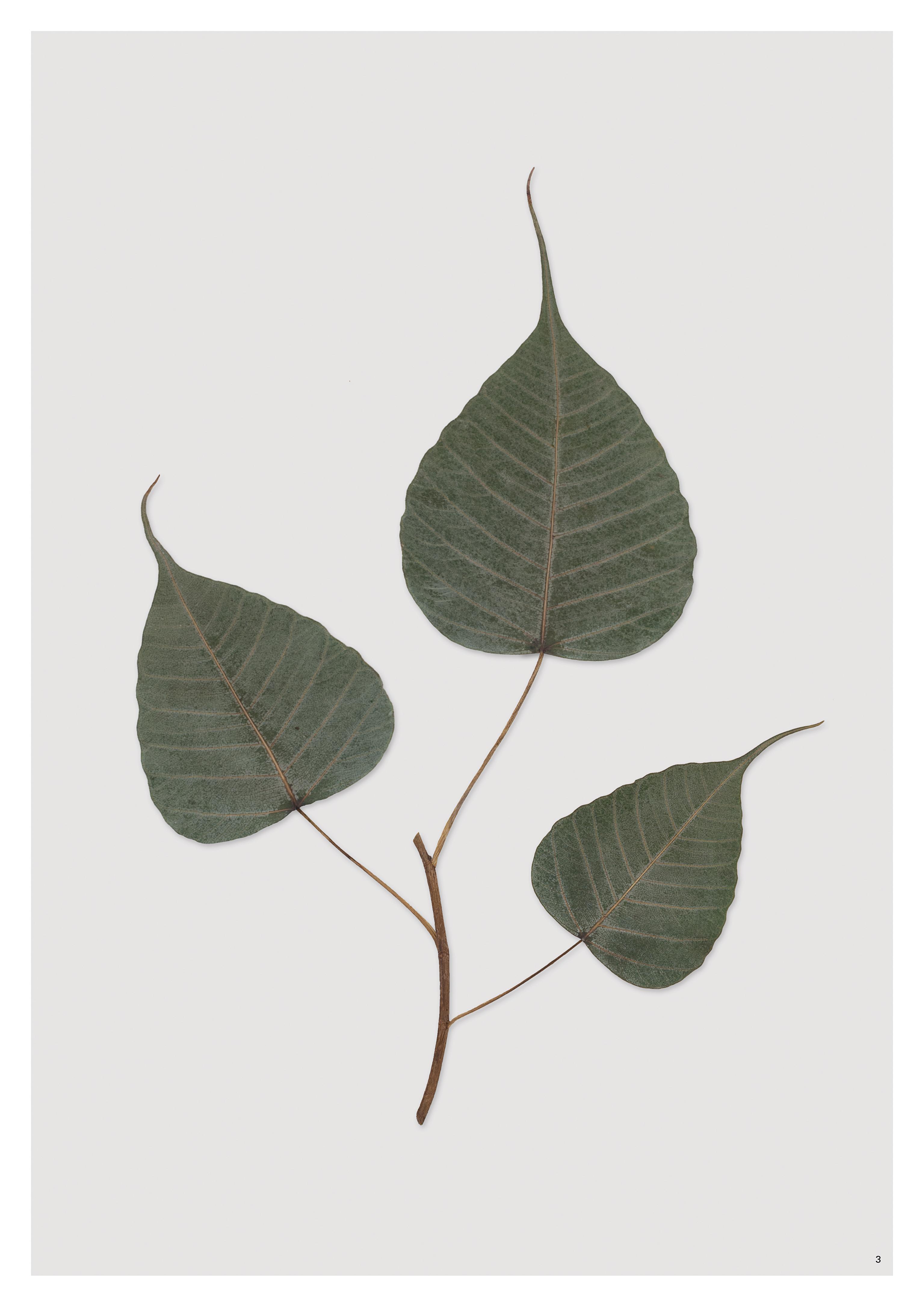 werner26_herbarium_media_01