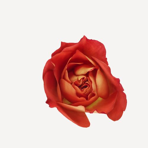 Rosa Gebrüder Grimm™